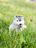 在室外的绿草的逗人喜爱的小狗玩偶 免版税库存照片