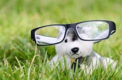 在室外的绿草的逗人喜爱的小狗玩偶 库存照片