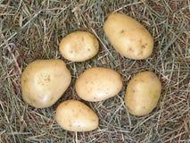在室外秸杆的土豆 免版税库存图片