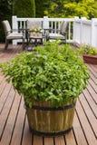 在室外露台的家庭菜园草本 免版税库存图片