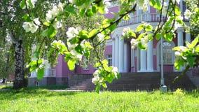 在宫殿附近的苹果树开花在城市 股票录像