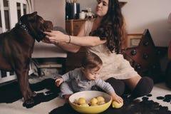在家使用与狗的愉快的家庭 母亲和吃曲奇饼的男婴 库存照片