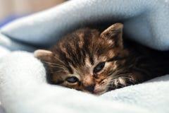 在家在毯子的一只逗人喜爱的小的小猫 库存图片