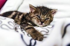 在家在毯子的一只逗人喜爱的小的小猫 图库摄影