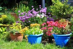 在家庭菜园的各种各样的五颜六色的花 免版税库存照片
