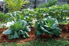 在家庭菜园的蔬菜 免版税库存图片