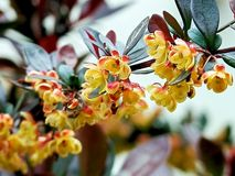 在家庭菜园种植的春天花在春天 库存照片