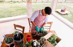 在家户外年轻人花匠一张顶视图,种植花 库存图片