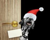 在家看门入口与空的卡片的红色圣诞节圣诞老人帽子的愉快的达尔马希亚狗 隔绝  库存图片