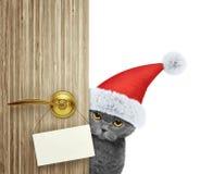 在家看门入口与空的卡片的红色圣诞节圣诞老人帽子的猫 查出在白色 图库摄影