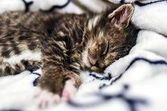 在家睡觉在毯子的一只逗人喜爱的小的小猫 免版税图库摄影