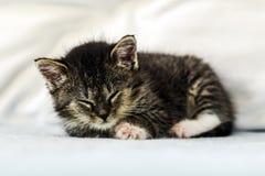 在家说谎和睡觉在长沙发的一只逗人喜爱的小的小猫 免版税库存图片