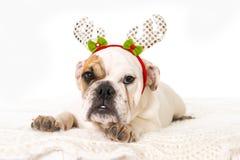 在家说谎在床上的幼小矮小的法国牛头犬崽狗与圣诞节驯鹿垫铁帽子 免版税库存照片