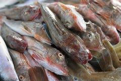 在容器的梭鱼 免版税图库摄影
