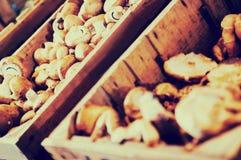 在容器的蘑菇 免版税库存图片