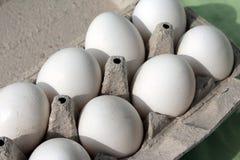 在容器的鸡蛋 免版税库存图片