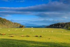 在宽山横向的绵羊 库存图片