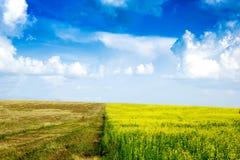 在宽领域的平安的农村风景 免版税图库摄影