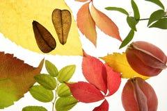 在寂静的白色的秋天装饰秋天叶子 库存照片