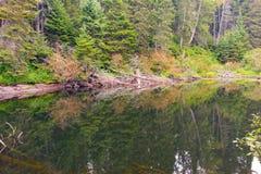 在寂静的水反映的树 免版税库存照片