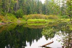 在寂静的水反映的树 免版税库存图片