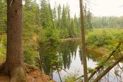 在寂静的水反映的树 库存照片