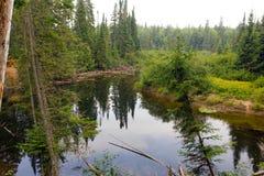 在寂静的水反映的树 库存图片