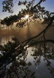 在寂静的水和树反映的日出通过杉木分支,与透镜火光 库存图片