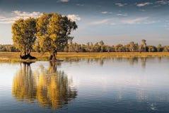 在寂静的水的反射在卡卡杜,澳大利亚 免版税库存图片