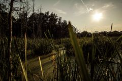 在密执安沼泽地的日落 库存图片