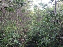在密林中间 库存图片