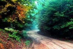 在密林之间的绿色泥路 图库摄影