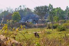 在密林位于的史诗村庄中间的神奇小屋 库存照片