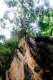 在密林把树留在 免版税库存图片