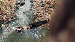 在密林森林录影转移行动的美丽的瀑布 影视素材
