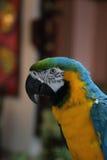在密林海岛,迈阿密,佛罗里达的五颜六色的鹦鹉 免版税库存图片