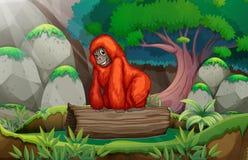 在密林的一个大猩猩 库存例证