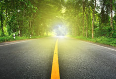 在密林的柏油路有光的 库存照片