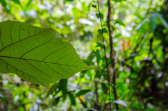 在密林背景的叶子 免版税图库摄影