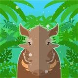 在密林背景的疣肉猪 库存照片