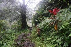 在密林远足的道路在巴厘岛印度尼西亚非常绿色植物和瀑布 免版税库存照片