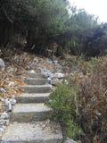 在密林道路的台阶向nowwehre 库存照片