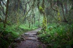在密林雨林的道路 库存照片