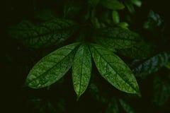 在密林,黑暗和喜怒无常的射击的热带叶子 免版税库存图片