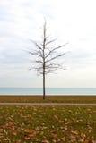 在密歇根湖岸的秋天树苗  库存图片