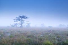 在密集的早晨雾的树 库存照片