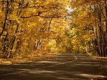在密集的木头做曲拱在路上的树的秋天森林里柏油路 与黄色叶子的树在10月 免版税库存图片