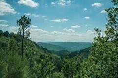 在密集的森林盖的谷的绿色树梢 库存图片