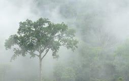 在密集的热带雨林的早晨雾在轰隆lang国家公园 免版税库存照片