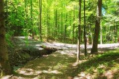 在密集的绿色森林道路的山道路在小小河在阳光下 免版税库存图片
